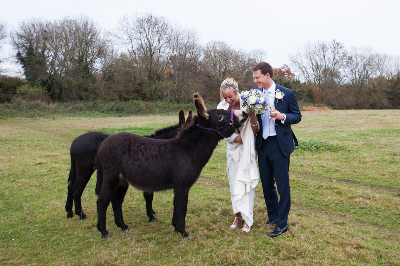 Bride and Groom with donkeys at their wedding