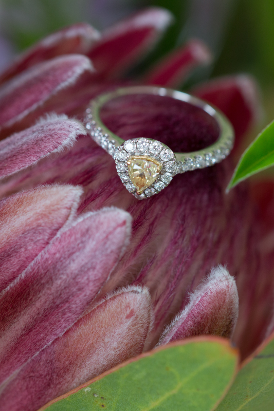 Engagement ring on protea flower